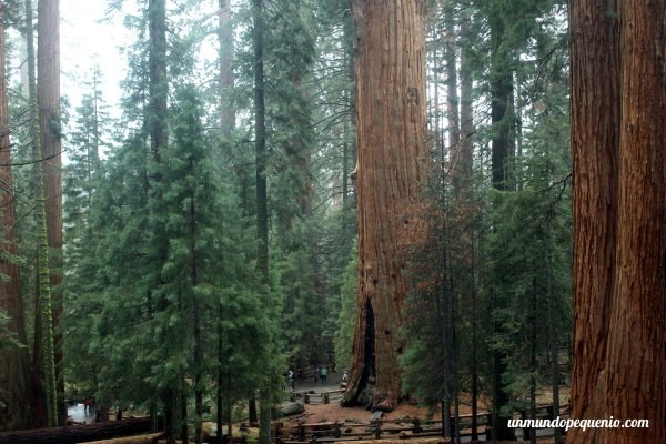 Bosque de secuoyas en California